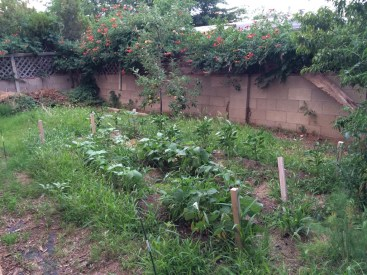 Some serious weeding is in order-