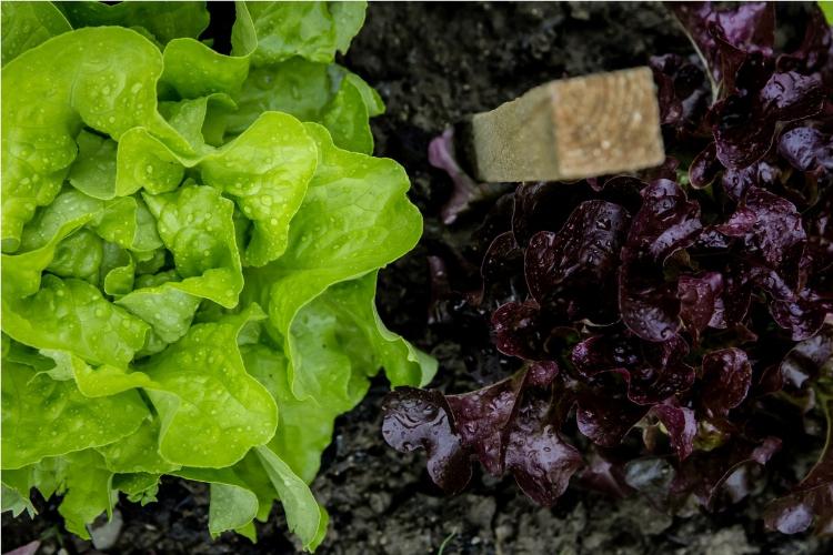 Growing an Organic Garden