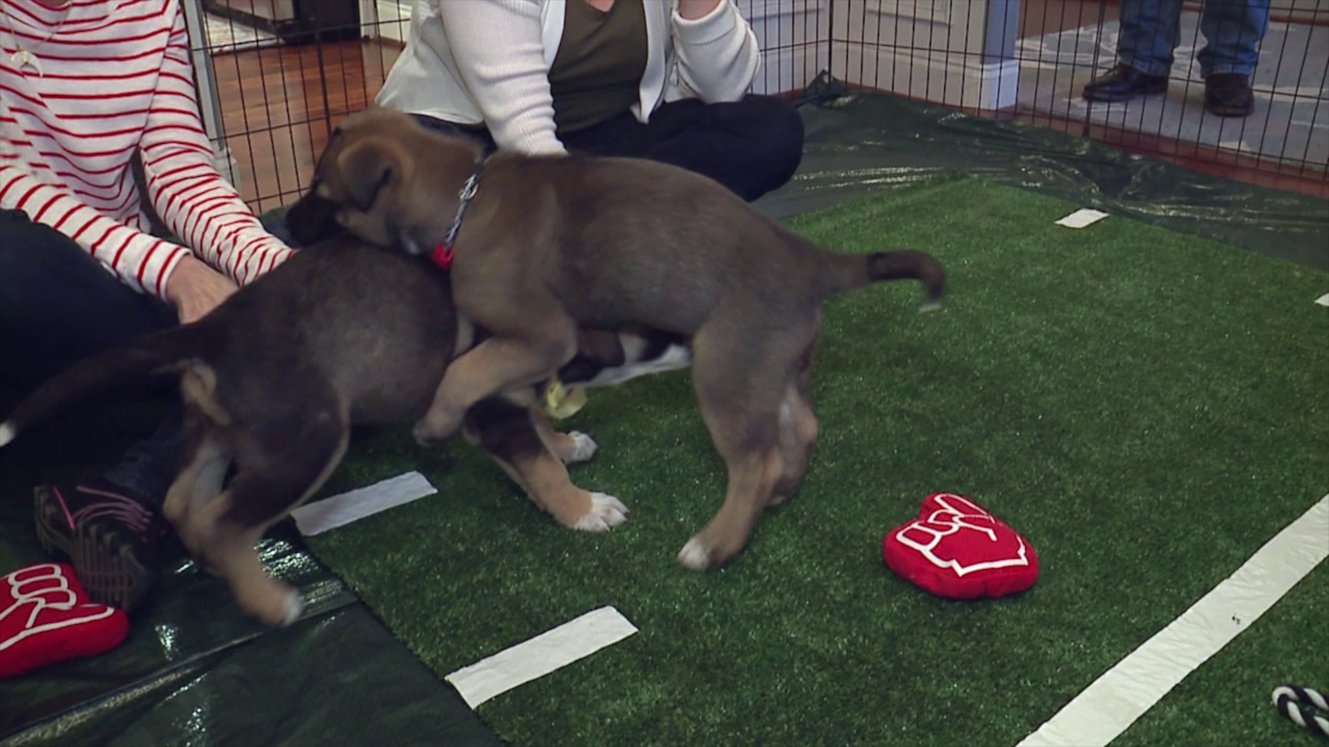 Local woman hosts Puppy Bowl