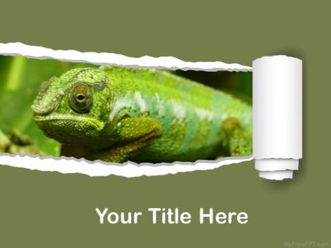 Free Amphibian PPT Template