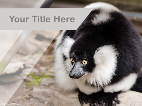 Free Black And White Lemur PPT Template