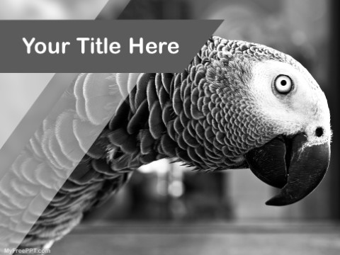 Free Budgerigars PPT Template