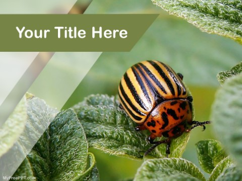 Free Bugs PPT Template
