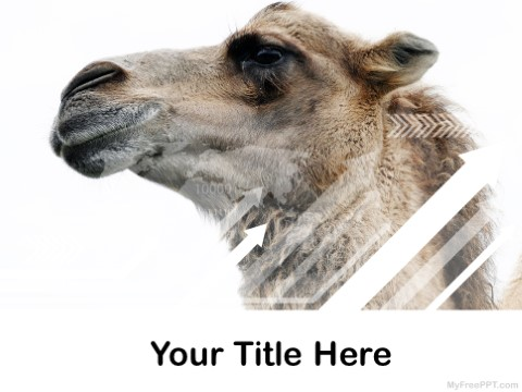 Free Camel PPT Template
