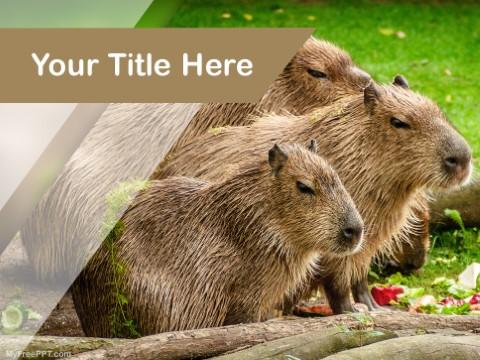 Free Capybara PPT Template