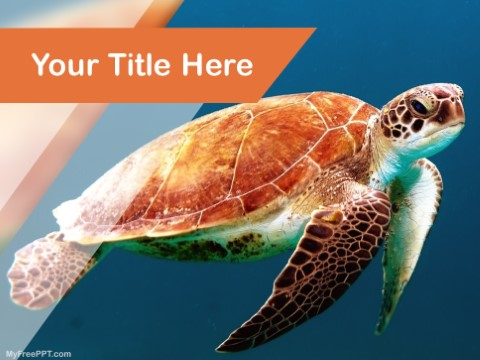 Free Carapace PPT Template