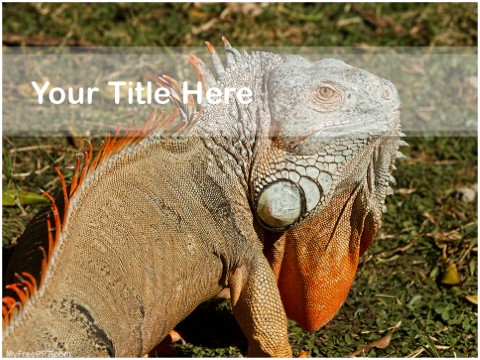 Free Chameleon PPT Template