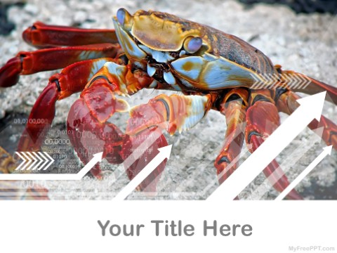 Free Crab PPT Template