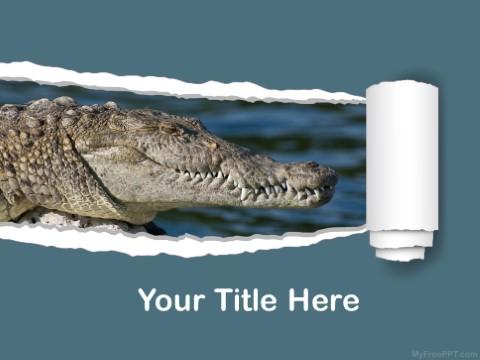 Free Crocodile PPT Template