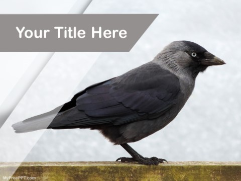 Free Crow PPT Template