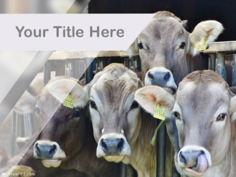Free Dairy Farm PPT Template Download Free PowerPoint PPT
