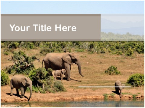 Free Elephants PPT Template