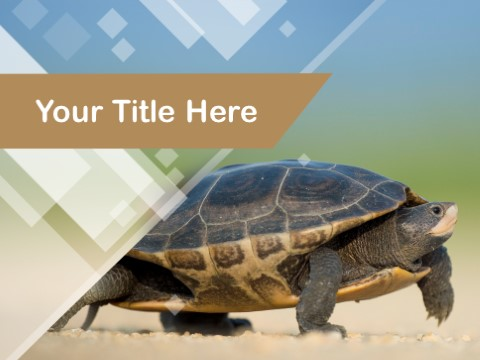 Free Endangered Turtle PPT Template
