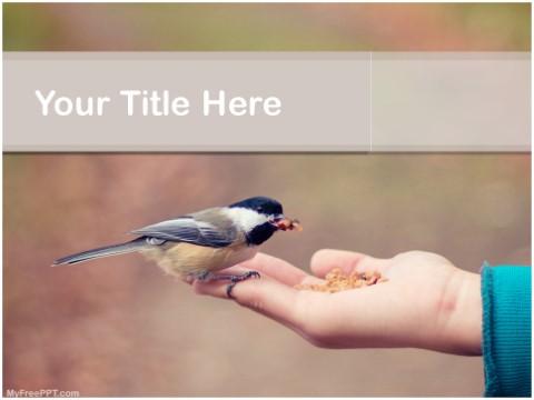 Free Feeding Bird PPT Template