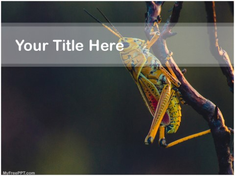 Free Grasshopper PPT Template