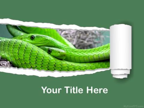 Free Green Mamba PPT Template