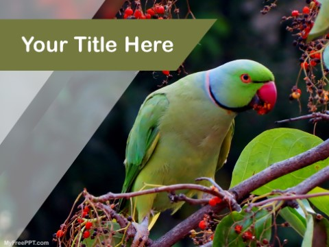 Free Green Parrot PPT Template