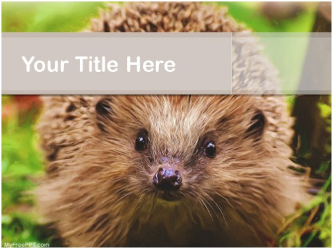 Free Hedgehog PPT Template