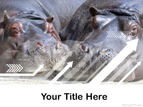 Free Hippopotamus PPT Template