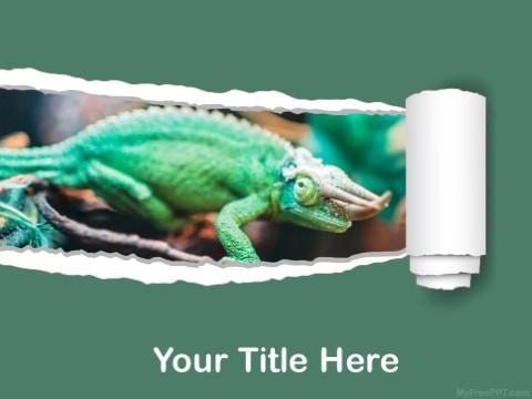 Free Iguana PPT Template