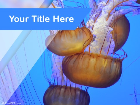 Free Jellyfishes PPT Template