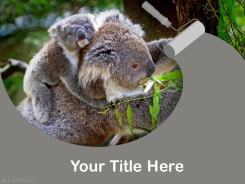 Free Koala Bears PPT Template