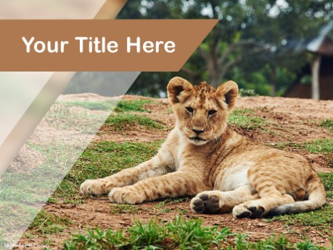 Free Lion Cub PPT Template