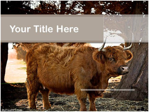 Free Ox PPT Template