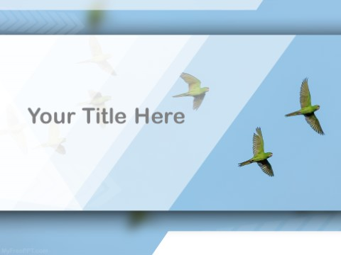 Free Parrots PPT Template