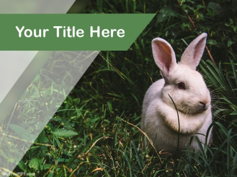 Free Rabbit PPT Template