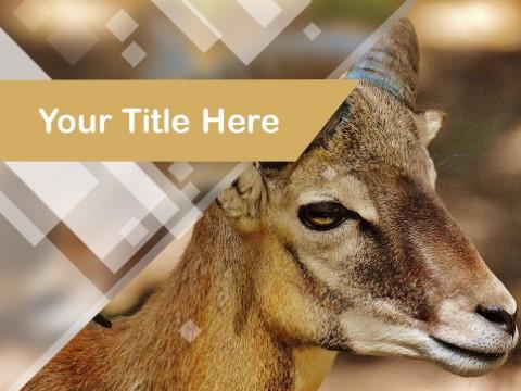 Free Ram Goat PPT Template