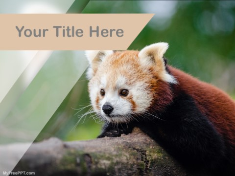 Free Red Panda PPT Template