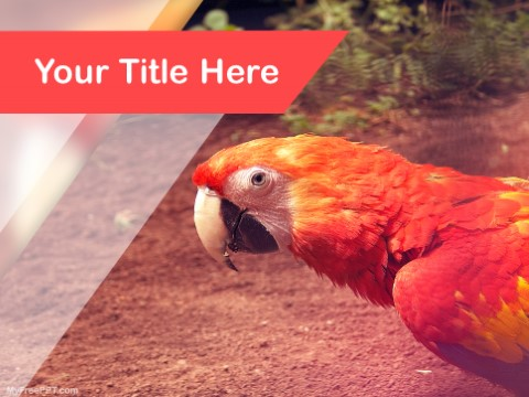 Free Scarlet Macaw PPT Template