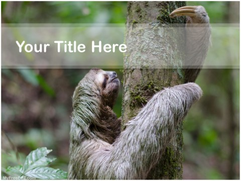 Free Sloth PPT Template