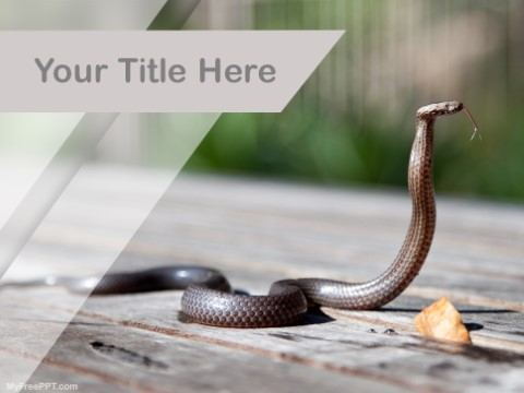 Free Snake PPT Template