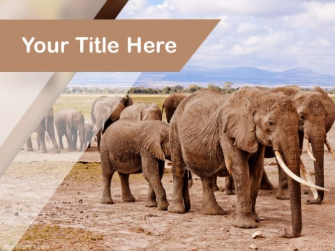 Free Social Animal PPT Template