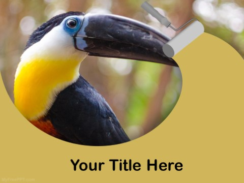 Free Toucan PPT Template