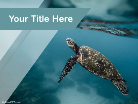 Free Underwater Photography PPT Template