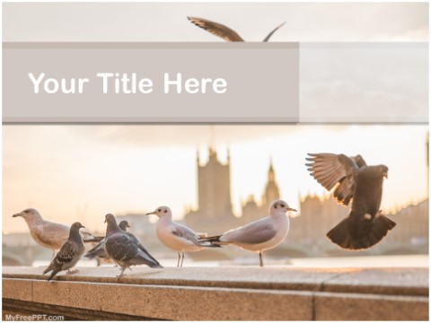 Free Urban Birds PPT Template