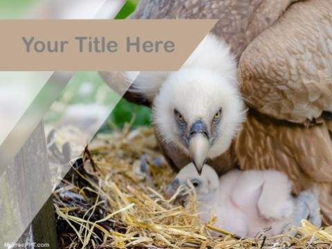 Free Vulture Breed PPT Template