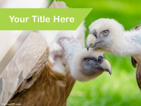 Free Vultures PPT Template