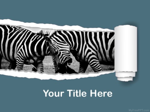 Free Zebras PPT Template