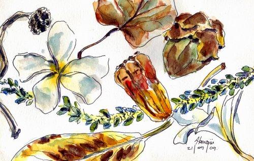 hawaii sketch 1