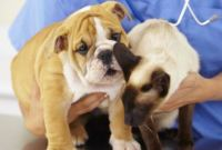 How to Treat Diarrhea in Dogs or Cats