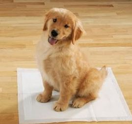 How to Clean Up Dog Poop on Carpet