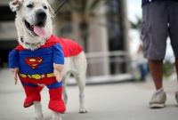 How to Make Halloween Costume for Dog