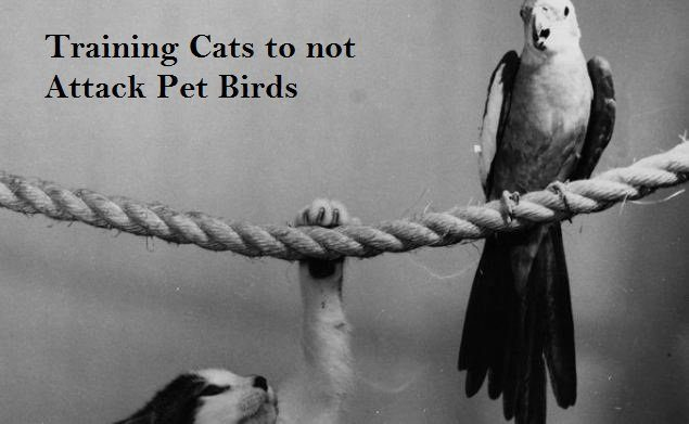 Training Cats to not Attack Pet Birds