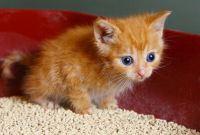 How Often should you Change Cat Litter