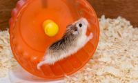 How to Play with Your Hamster In and Out of The Cage