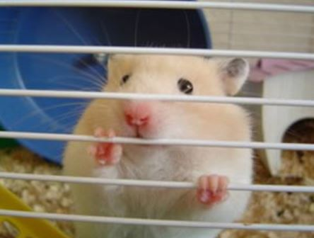 How to Stop Hamster from Biting Cage
